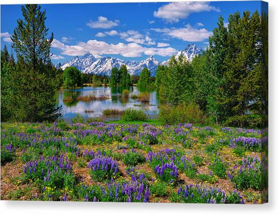 Canvas Print featuring the photograph Pilgrim Creek Wildflowers by Greg Norrell