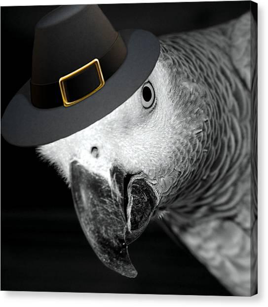 Pilgrim Parrot Canvas Print
