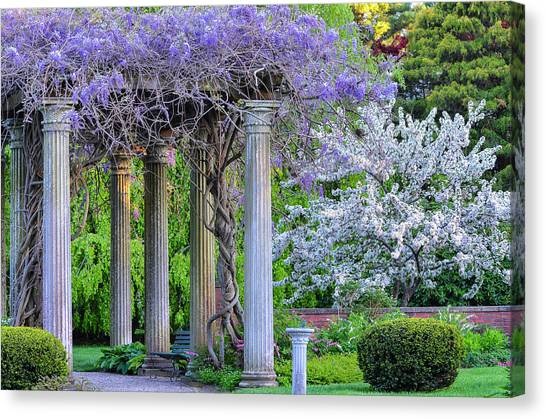 Pillars Of Wisteria Canvas Print