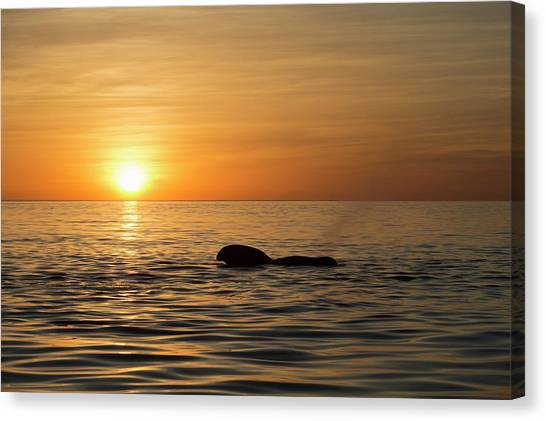 Sunrise Horizon Canvas Print - Pilot Whale At Dawn by Christopher Swann