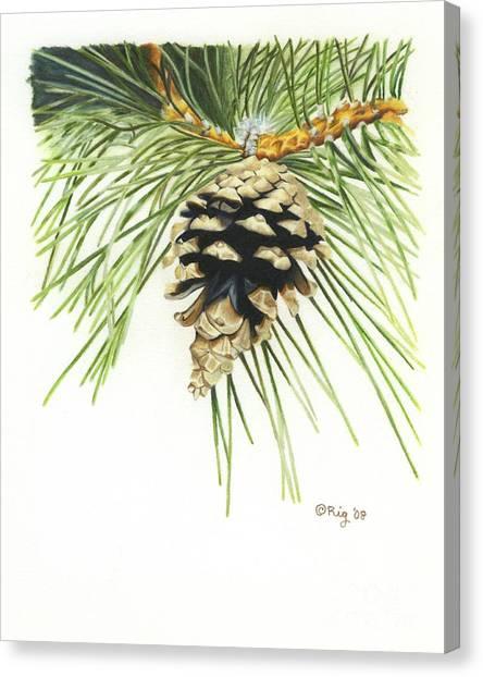 Pincone Canvas Print