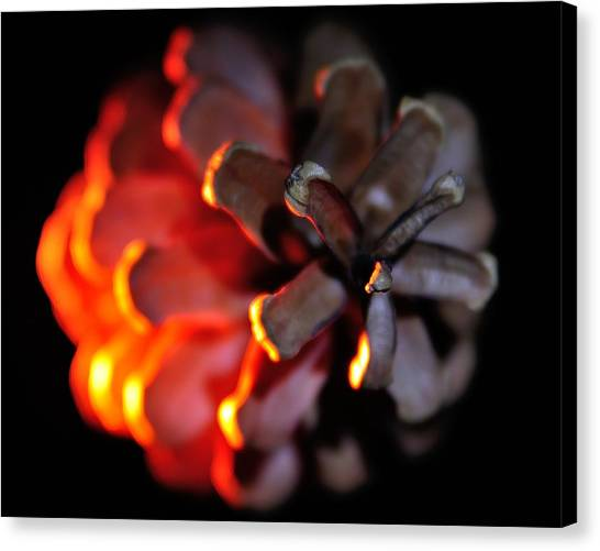 Pine Cone Fire Canvas Print