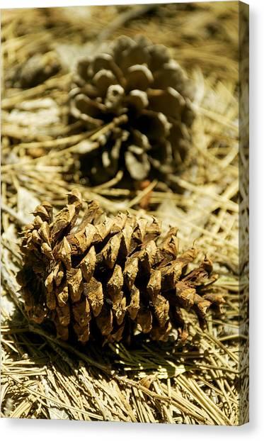 Pine Cones In The Valley-yosemite Series 30 Canvas Print by David Allen Pierson