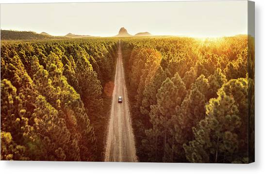 Pine Forest Canvas Print by Flyfilm.tv
