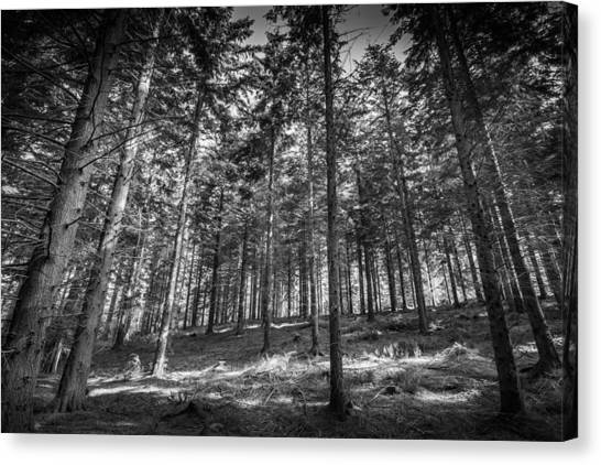Canvas Print featuring the photograph Pine Forest by Gary Gillette
