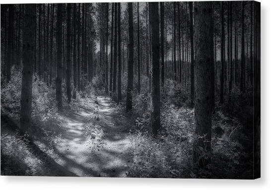 Pine Trees Canvas Print - Pine Grove by Scott Norris