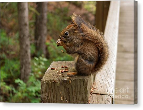 Pine Lunch Canvas Print