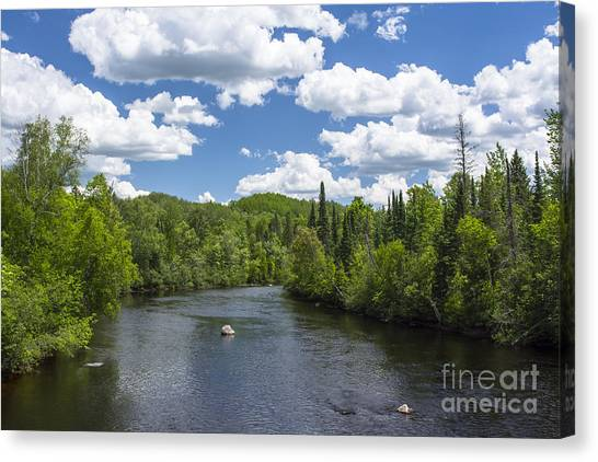 Pine River Canvas Print
