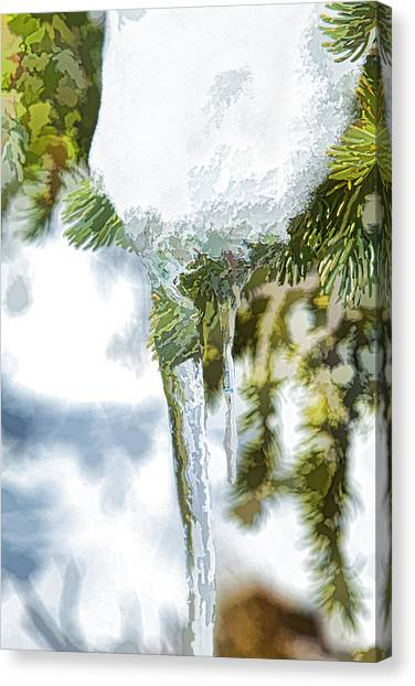 Pine Snow And Ice Canvas Print