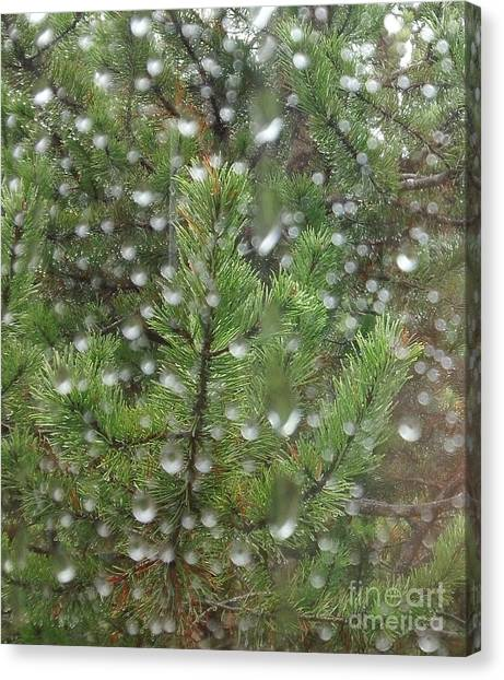 Pine Tree In The Rain Canvas Print