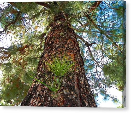 Pine Tree Tower Canvas Print