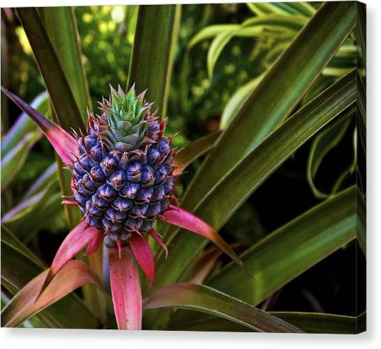 Pineapple Royal Canvas Print