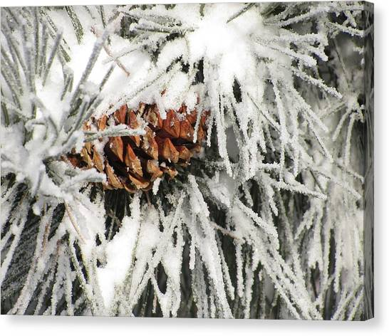 Pinecone In Snow Canvas Print by Steven Parker