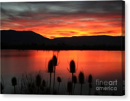 Pineview Dawn Canvas Print