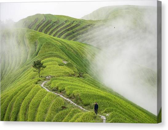 China Canvas Print - Ping'an Rice Terraces by Miha Pavlin