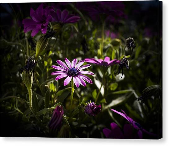 Pink Canvas Print by Amr Miqdadi