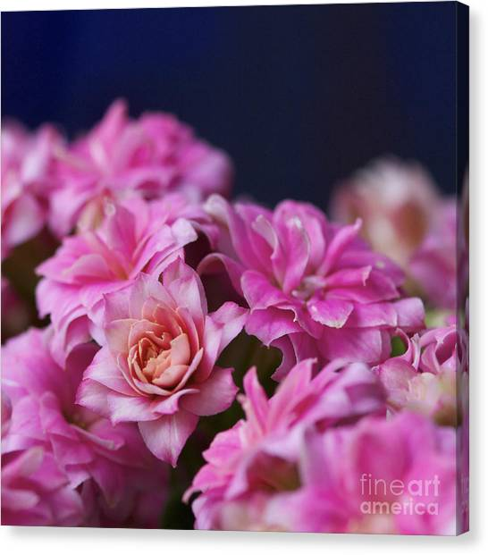 Pink And Blue II Canvas Print by Pamela Gail Torres