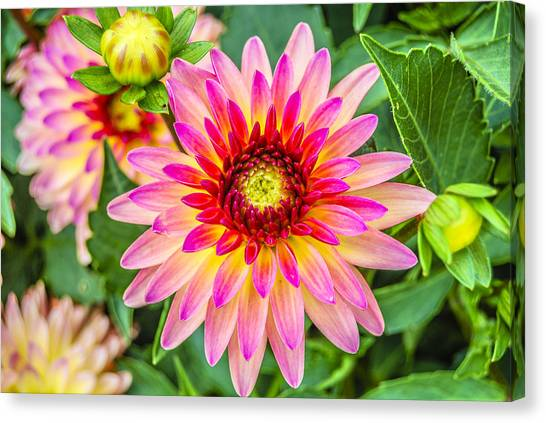 Pink And Purple Blooms Canvas Print