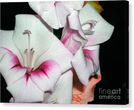 Pink And White Beauties Canvas Print