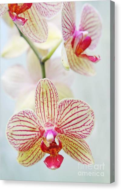 Pink And White Orchids Canvas Print