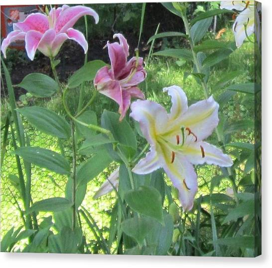 Pink And White Stargazer Lilies Canvas Print