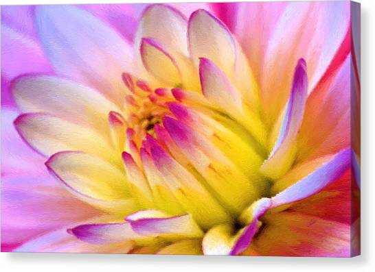 Pink And White Water Lily Canvas Print