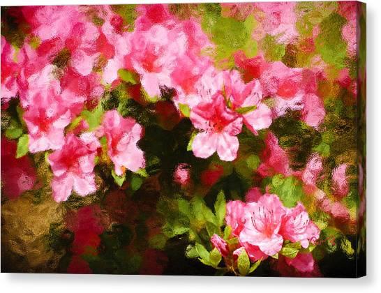 Pink Azealas Canvas Print
