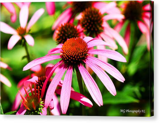 Pink Beauty Canvas Print