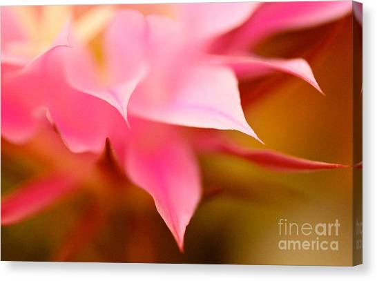 Pink Cactus Flower Abstract Canvas Print
