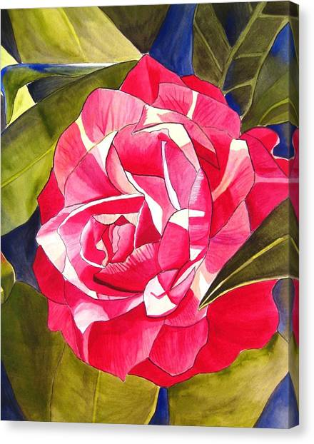 Pink Camellia Canvas Print by Sacha Grossel