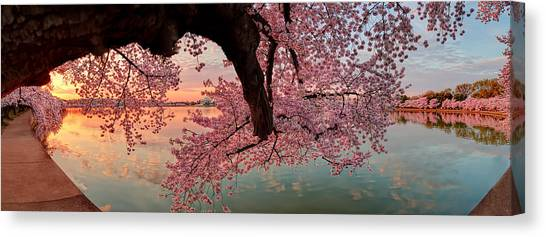 Pink Cherry Blossom Sunrise Canvas Print