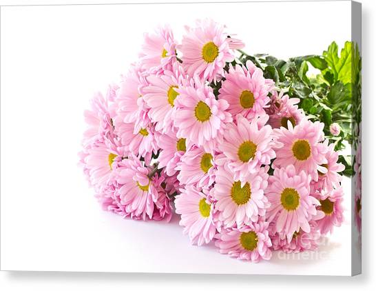 Pink Chrysanthemum Prints Canvas Print by Boon Mee