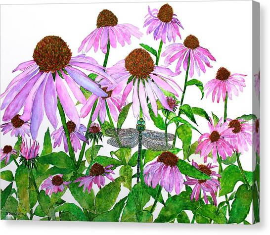 Pink Cone Flowers And Dragonfly Canvas Print