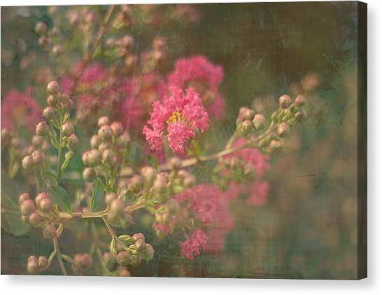 Pink Crepe Myrtle Canvas Print