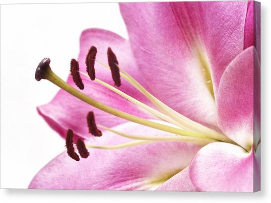 Pink Curves Canvas Print by Kim Andelkovic