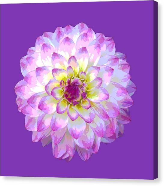 Pink Dahlia Posterized On Purple. Canvas Print by Rosemary Calvert