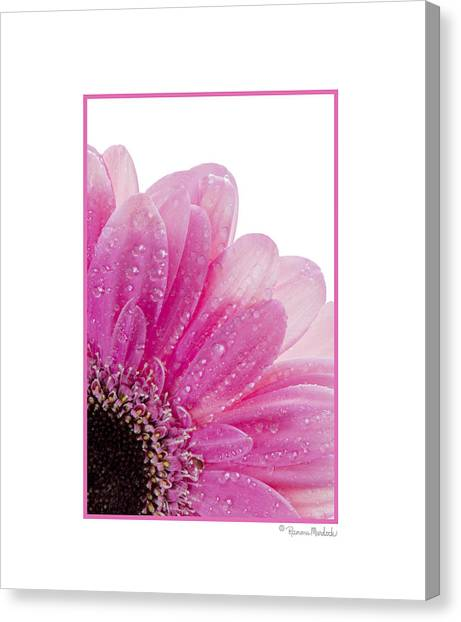 Pink Daisy Petals Canvas Print