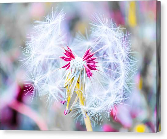 Magic In Pink Canvas Print