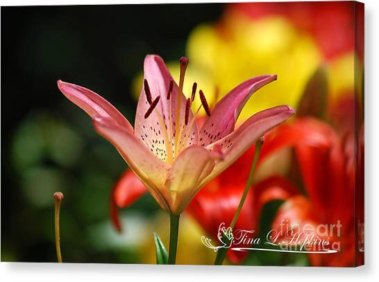 Pink Day Lily 20120614_47a Canvas Print