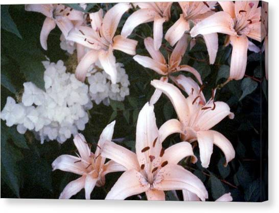 Pink Daylilies Canvas Print
