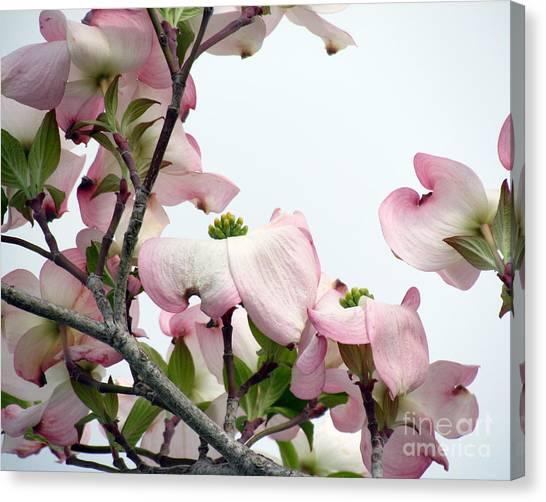 Pink Dogwood I Canvas Print