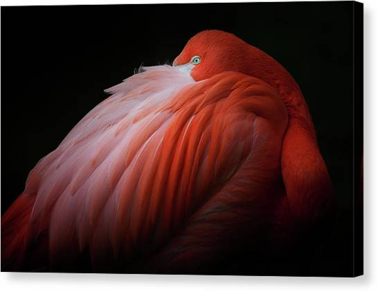 Pink Flamingo Canvas Print by Billy Currie Photography