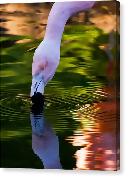 Pink Flamingo Ripples And Reflection Canvas Print