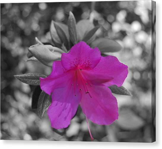Pink Flower 2 Canvas Print