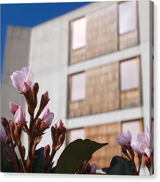Ucsd Canvas Print - #pink #flower #building #bokeh #salks by Anthony Wang