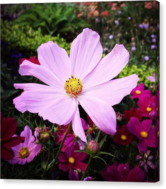 Pretty Pink Poppy Macro Canvas Print - Pink Flower by Les Cunliffe