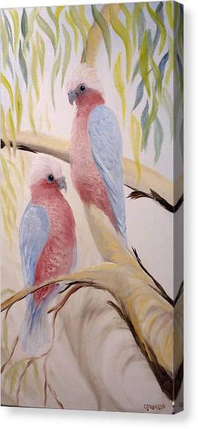 Pink Gallah's Canvas Print