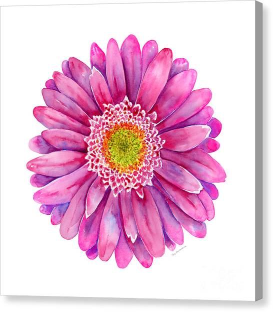 Pink Canvas Print - Pink Gerbera Daisy by Amy Kirkpatrick