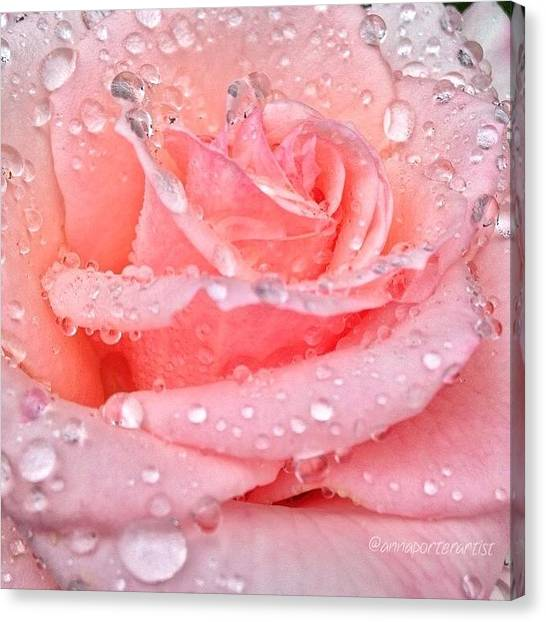 Wet Canvas Print - Pink Kisses by Anna Porter