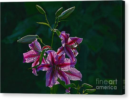 Pink Lilies In The Rain 2 Canvas Print by Sharon Talson